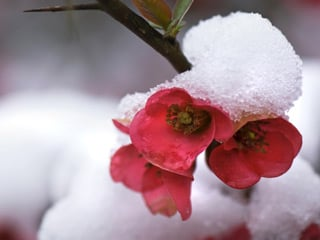 Plants under snow cover are exposed to fewer drastic temperature changes (© iStockphoto / Thinkstock)